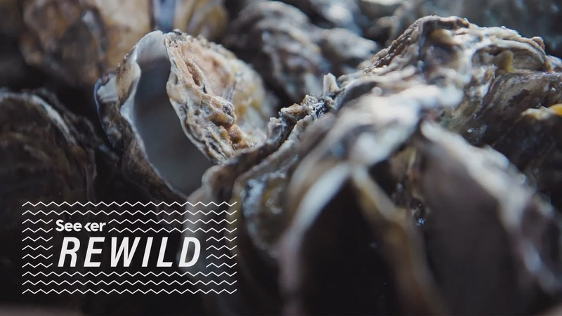 What Ocean Time Machine Experiments Predict About Oysters